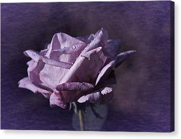 Canvas Print featuring the photograph Mid September Purple Rose by Richard Cummings