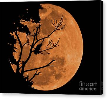 Mid Summer Nightmare  Canvas Print