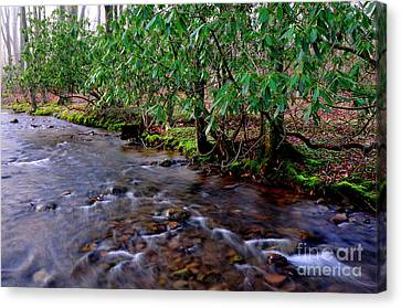 Middle Fork Morning Canvas Print by Thomas R Fletcher