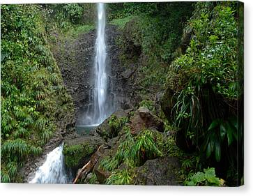 Middleham Waterfall In Dominica Canvas Print by Tropical Ties Dominica