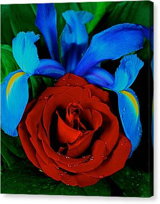 Midnight Blue Iris And A Red Rose Canvas Print by Leslie Crotty