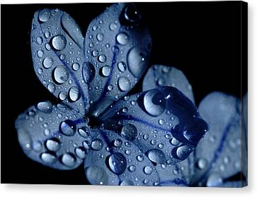 Midnight Dew Canvas Print