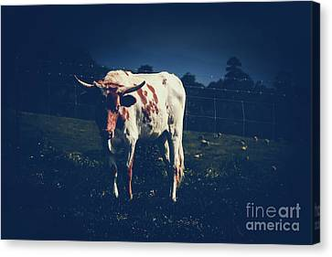 Canvas Print featuring the photograph Midnight Encounter by Sharon Mau