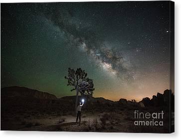 Midnight Explorer Finding Joshua Tree  Canvas Print by Michael Ver Sprill