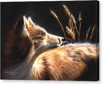 Midnight Fox Canvas Print