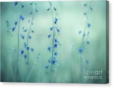 Midnight Meadow Canvas Print by Priska Wettstein