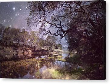 Midnight Serenade  Canvas Print by Pamela Patch