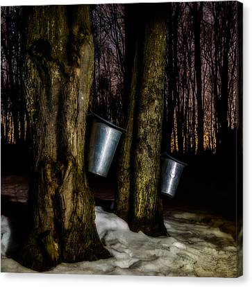 Midnight Sugar Canvas Print by Chris Bordeleau