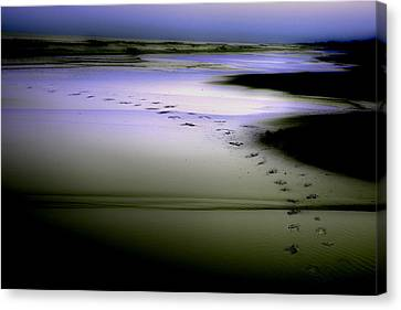 Canvas Print featuring the photograph Midnight Swim by Gray  Artus