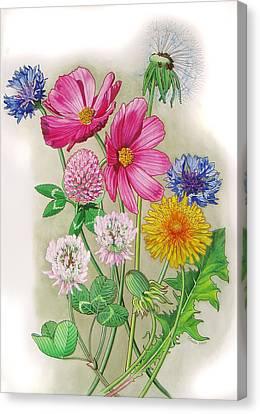 Midsummer Day Dream Canvas Print by Vlasta Smola