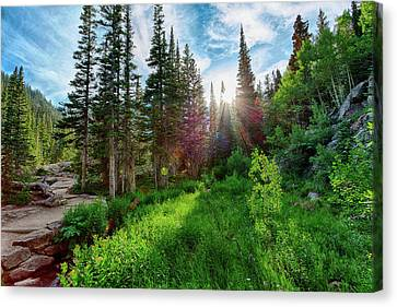 Canvas Print featuring the photograph Midsummer Dream by David Chandler