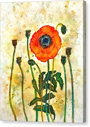 Midsummer Poppy Canvas Print