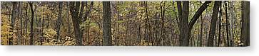 Canvas Print featuring the photograph Midwest Forest by Robert Harshman