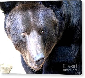 Mighty Black Bear Canvas Print by Anne Raczkowski