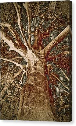Mighty Tree Canvas Print by Frank Tschakert
