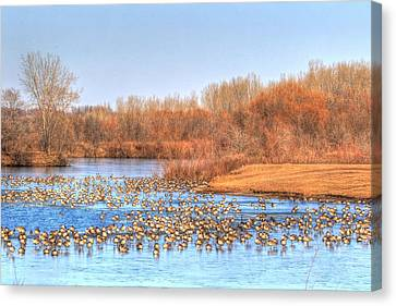 Migration Break On Ice Canvas Print