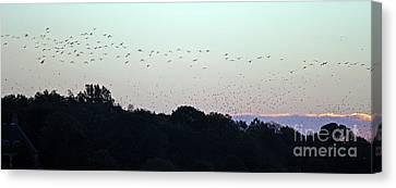 Migration Flyway Canvas Print