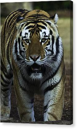 Mike Canvas Print by David Keith