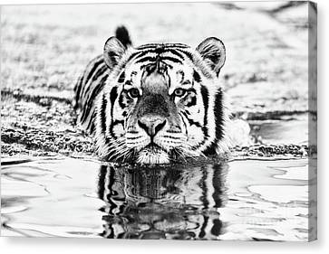 The Tiger Canvas Print - Big Mike  by Scott Pellegrin