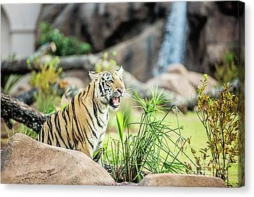 Mike The Tiger Canvas Print - Mike Vii Ready For The Season by Scott Pellegrin