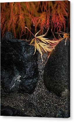 Canvas Print featuring the photograph Miksang 5 Autumn by Theresa Tahara
