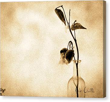 Milk Weed In A Bottle Canvas Print