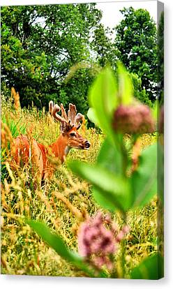 Milkweed Monster Canvas Print by Emily Stauring