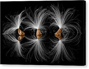 Milkweed Seeds Canvas Print by Jim Hughes