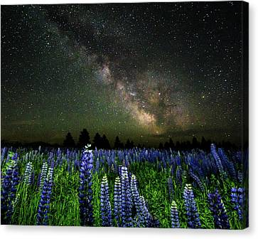 Milky Way And Lupine Canvas Print by Cody Gould
