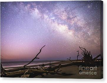 Milky Way Roots Canvas Print