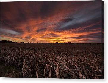 Harvest Canvas Print - Milo Harvest Sunset by Chris Harris