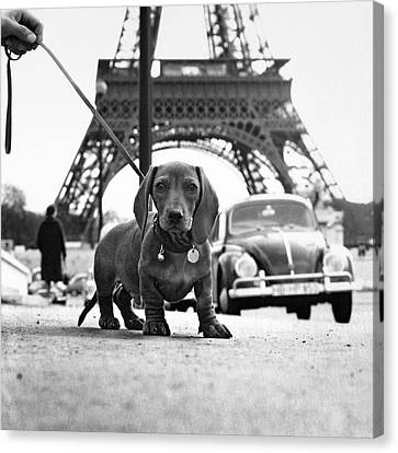Black And White Canvas Print - Milo Mon Chien by Hans Mauli
