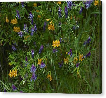 Mimulus And Vetch Canvas Print by Doug Herr