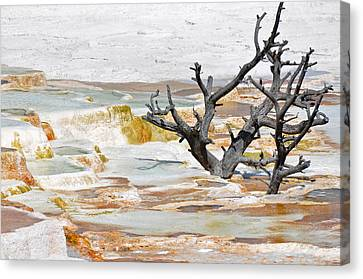 Mineralized Tree Canvas Print by Bruce Gourley