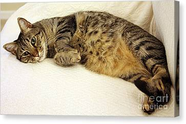 Ming Resting On The Couch Canvas Print