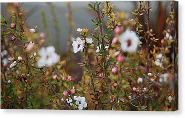 Mingling Flowers Canvas Print by Jean Booth