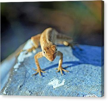 Mini Attitude Canvas Print by Kenneth Albin