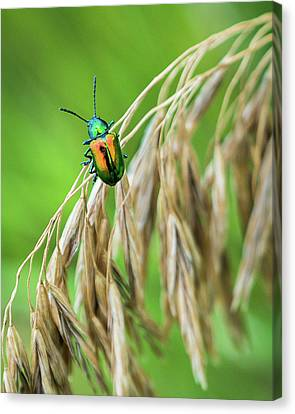 Canvas Print featuring the photograph Mini Metallic Magnificence  by Bill Pevlor