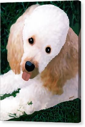 Canvas Print featuring the photograph Miniature Poodle Albie by Marian Cates