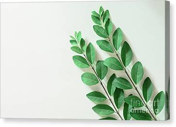 Canvas Print featuring the photograph Minimal Green by Andrea Anderegg