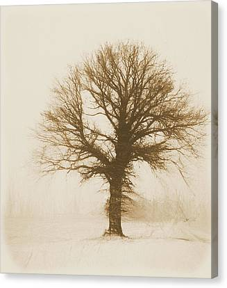 Minimal Winter Tree Canvas Print