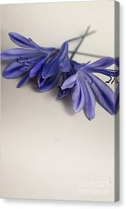 Minimalist Modern Flower Artwork Canvas Print