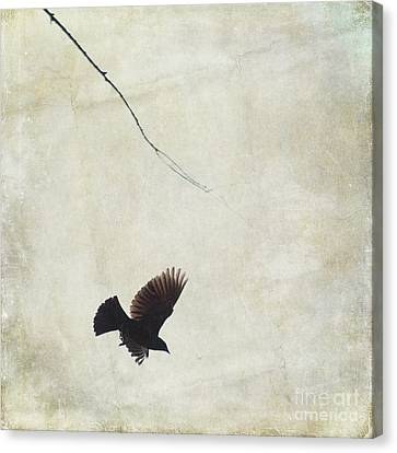 Canvas Print featuring the photograph Minimalistic Bird In Flight  by Aimelle