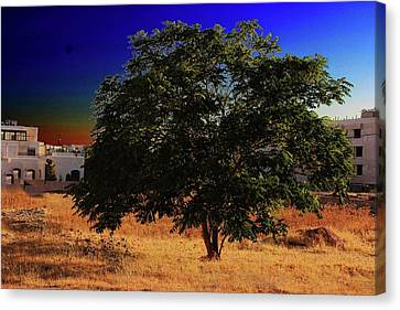 Miracle Tree Canvas Print by Kalyj