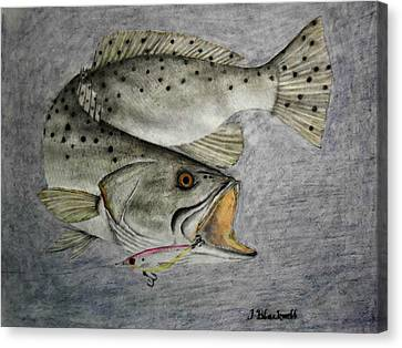 Mirrolure Trout Canvas Print by Jason Blackwell