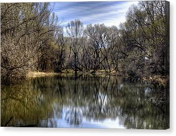 Mirrored Beauty Canvas Print by Thomas Todd