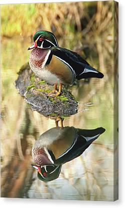 Mirrored Wood Duck Canvas Print