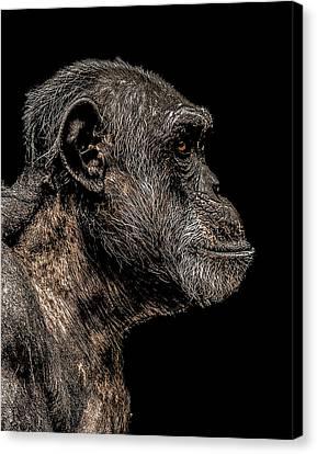 Mischievous Canvas Print by Paul Neville