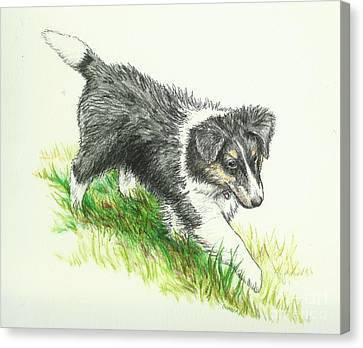 Shetland Sheepdog Canvas Print - Miss Mary by Sue Bonnar