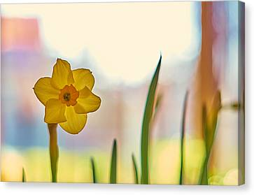 Miss Yellow Canvas Print